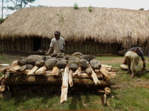 Don't leave any behind: A man arranges stones above a wooden platform while another man squats to pick up stones. The stones will be heated up by setting the logs on fire. Keeping warm: An old Papuan lady tends to a fire inside a traditional Papuan house.